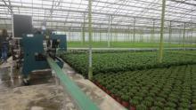 Dag van de Landbouw: Azalea's